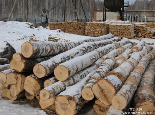 佛山桦木学名樱桃木木材进口报关从哪里进比较好
