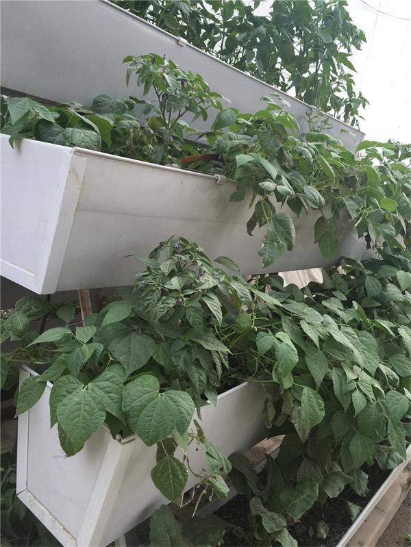 蔬菜草莓立体种植槽