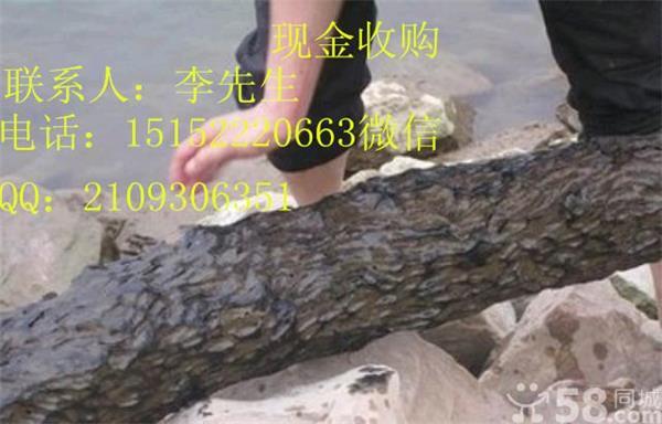 千年金丝楠乌木多少钱一吨?