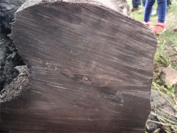 金丝楠木阴沉木如何鉴别 哪里有收购乌木的