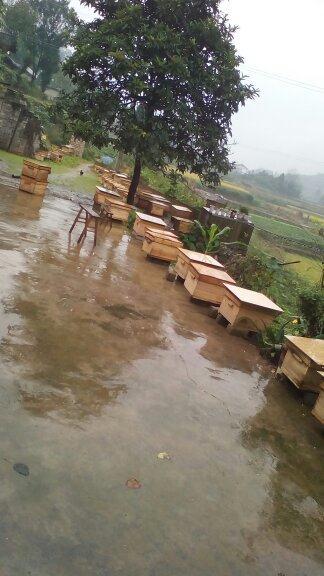 贵州大量出售蜜蜂群出售中蜂、云南遵义工厂_符文蝴蝶4分场boss图片