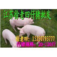 南通2017年11月小猪仔价格