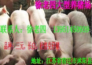淮北20至30斤三元仔猪价格