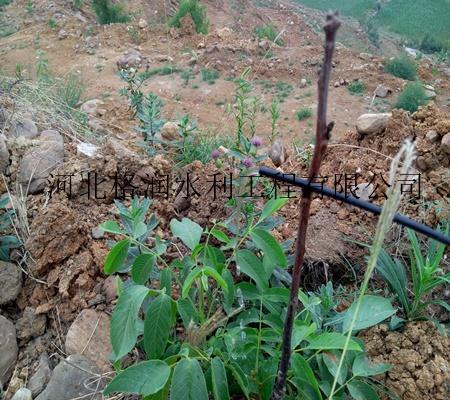 工程 小管出流节水灌溉系统 相关介绍