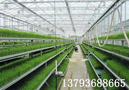 壁纸 成片种植 风景 植物 种植基地 桌面 500_350