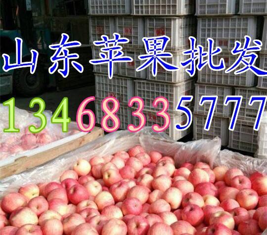乌鲁木齐市嘎拉苹果批发价格