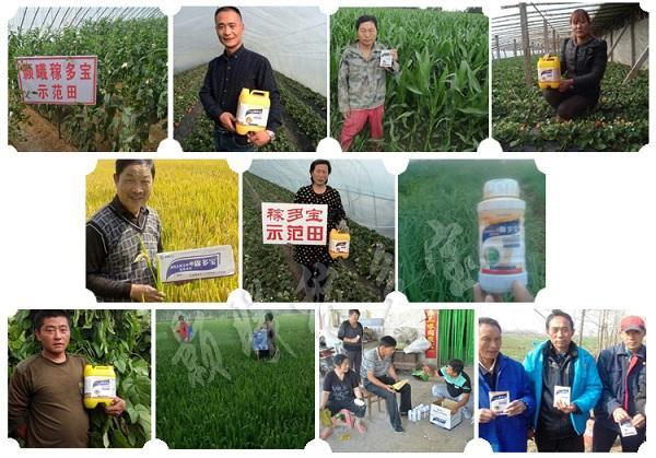 小麦叶面肥什么时候用好?【一件包邮】