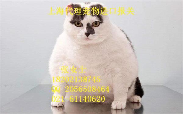 上海宠物进口执帆报关公司--------- 联系人: 张女士  手