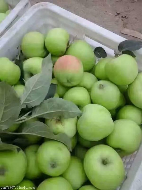 哪里早熟苹果脆甜好吃还便宜山东早熟苹果价格