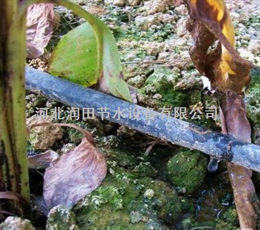 滴灌带厂家直销 江西玉山县微灌带品质上乘