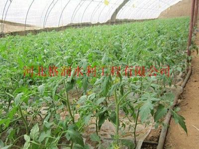 陕西农业大棚滴灌带生产厂家