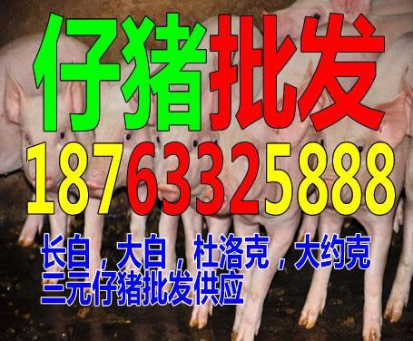 益阳猪苗价格趋势