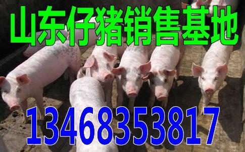 辽宁辽阳小猪苗收购价格