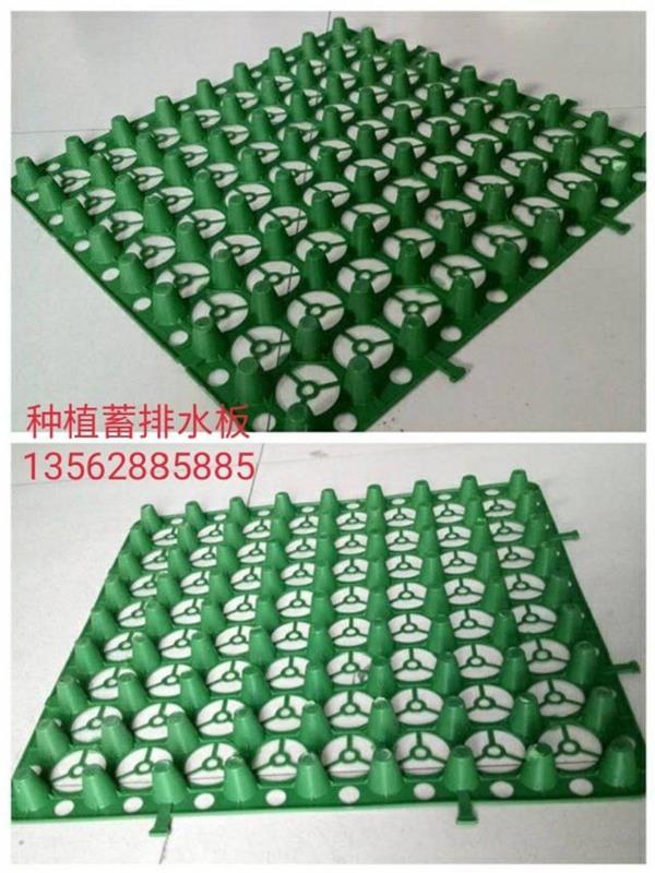 海绵纸制作孔雀图片