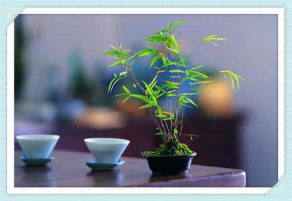 小微企业产业园项目实施方案蓬江立项